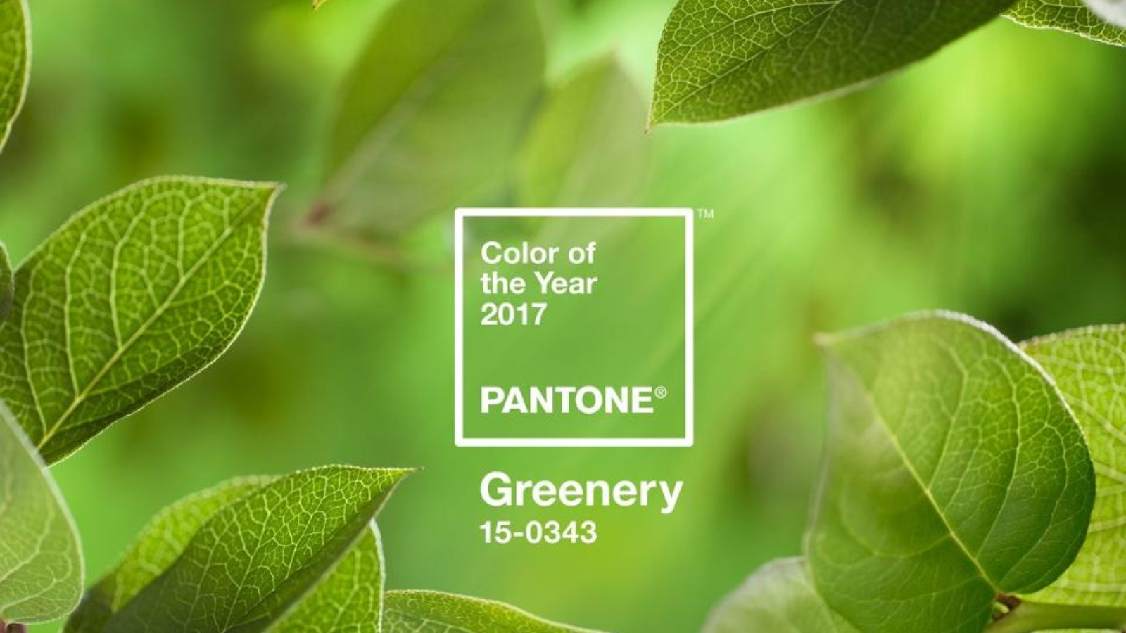 PANTONE-Color-of-the-Year-2017-Greenery-15-0343-leaves-2732x2048-1200x900.jpg